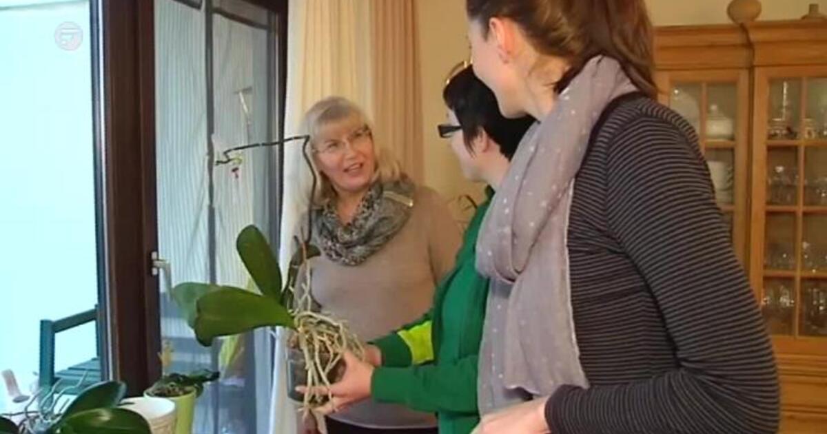 blatt und bl te hilfe f r orchideen franken fernsehen. Black Bedroom Furniture Sets. Home Design Ideas