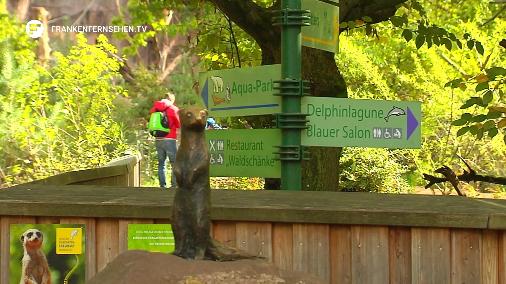 Nach dem Tod von Gorilla Fritz – Tiergarten Nürnberg sucht ein neues ...